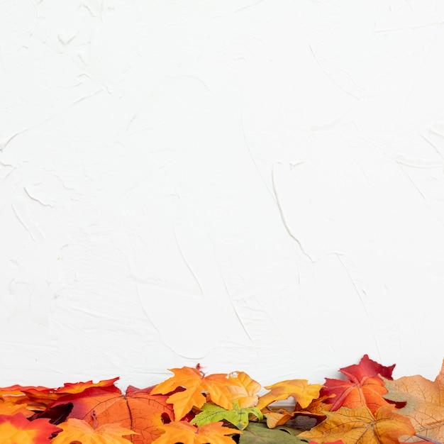 Colorulの葉に白背景 無料写真