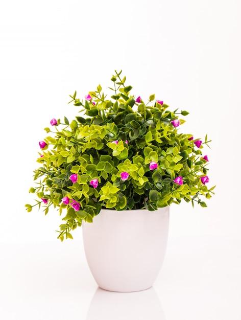 Цветные цветы в белом горшке на белом Бесплатные Фотографии