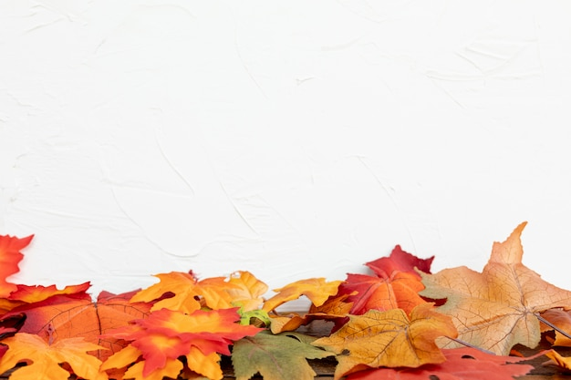 Colourul leaves with white background Free Photo