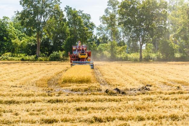 Зерноуборочный комбайн в действии на рисовом поле. сбор урожая - процесс сбора зрелого урожая Premium Фотографии