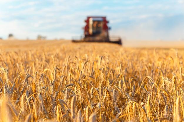 Combine harvester working Premium Photo