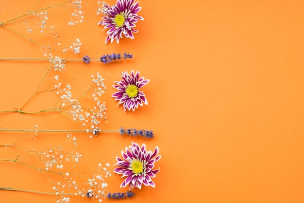 Common baby's-breath; chrysanthemum and lavender flower on an orange background Free Photo