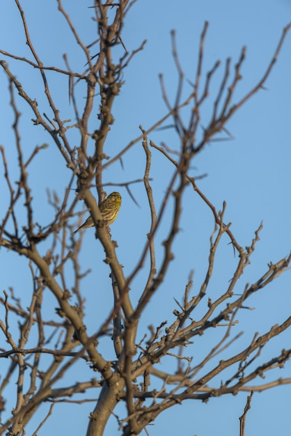 Common bird perched on the branches of a tree Premium Photo