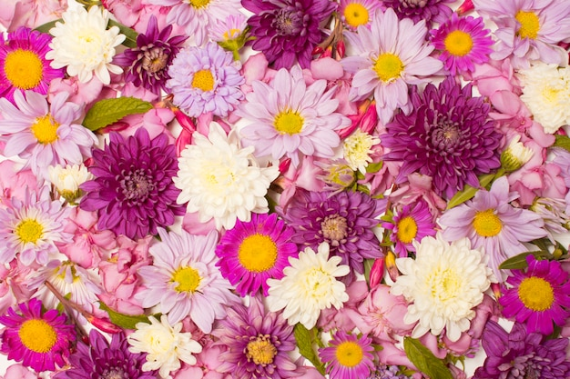 Composition of beautiful colourful flowers Free Photo