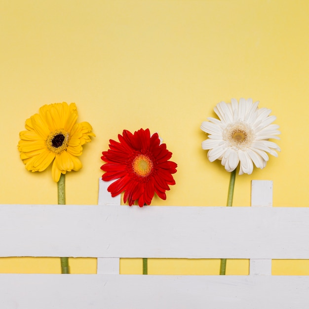 Composition of bright flowers and decorative fence on yellow surface Free Photo
