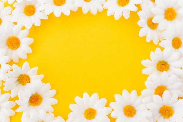 Composition in circle of daisies on yellow background Free Photo