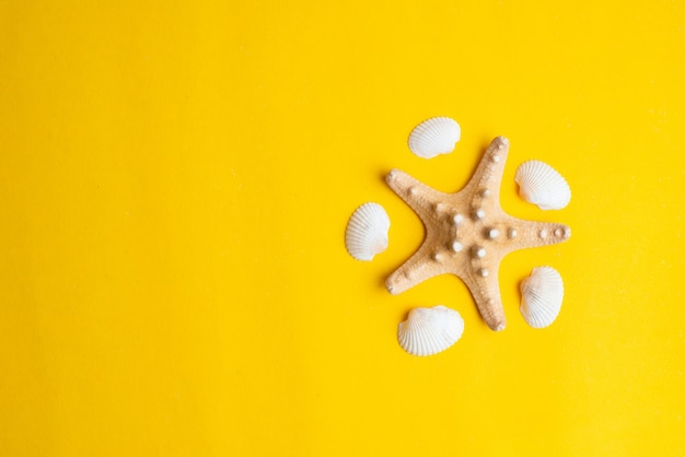 Composition of exotic sea shells on a yellow background Premium Photo