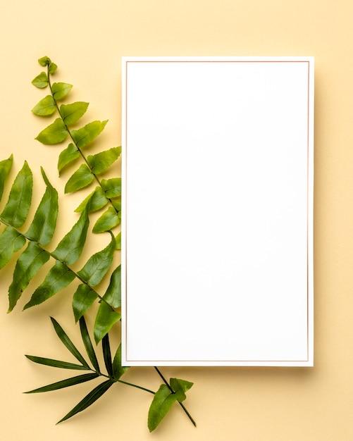 空のフレームを持つ緑の葉の構成 無料写真