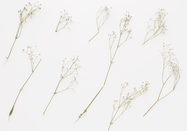 Composition of plant twigs with little flowers Free Photo
