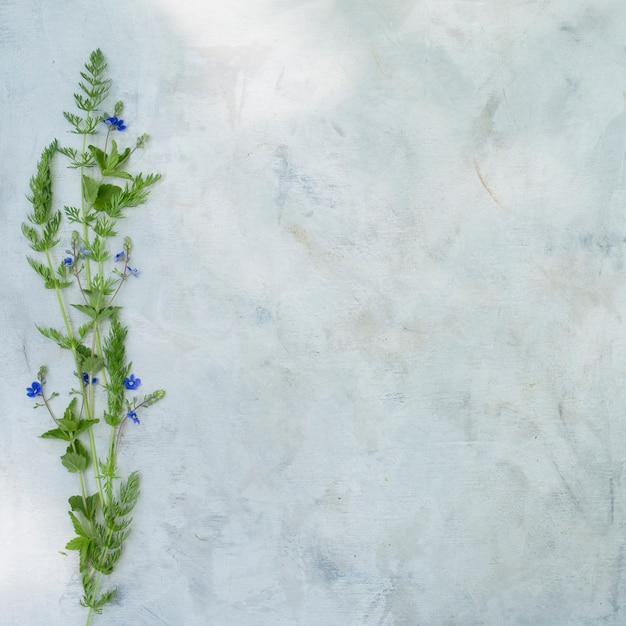 Composition of summer flowers on a gray background. Premium Photo