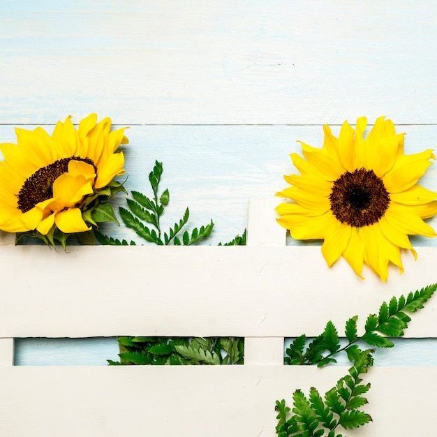 Composition of sunflowers and decorative fence on light blue surface Free Photo
