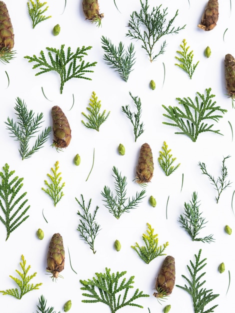 Composition of various coniferous branches, cones, needles with larch on white Premium Photo