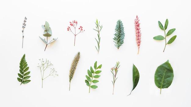 Состав с разными листьями Premium Фотографии