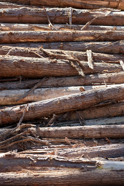 Composition with pile of wooden trunks in closeup Premium Photo