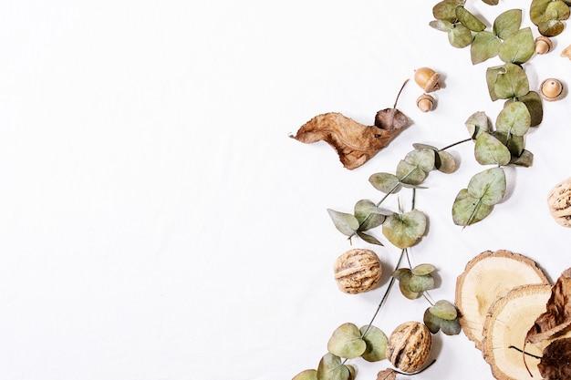 Композиция с желтыми кленовыми листьями, ветвями эвкалипта и каштанами на белом фоне. плоская планировка, копия пространства Premium Фотографии