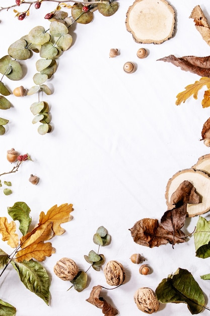 Composition with yellow maple leaves, eucalyptus branches and chestnuts over a white background. flat lay, copy space Premium Photo