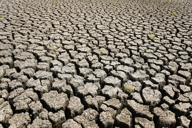 Concept of global warming Premium Photo