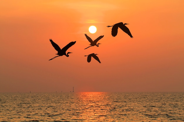 Under the concept of good leadership or teamwork ,like birds flying through the sunset Premium Photo
