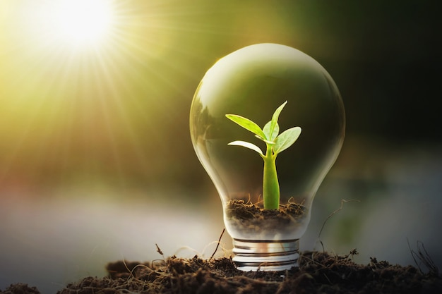 Concept idea saving energy young plant and light bulb Premium Photo