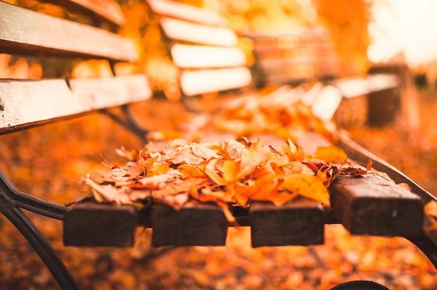 秋の公園の空のベンチには、赤と黄色の乾燥した葉が散らばっています。黄金の秋のクローズアップconcept.relaxing場所の反射と熟考。 Premium写真