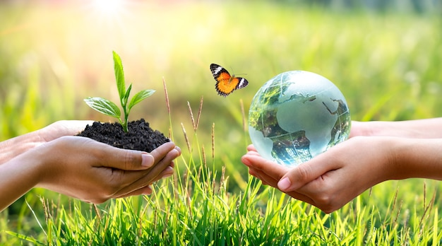 Concept save the world save environment. the world is in the grass Premium Photo