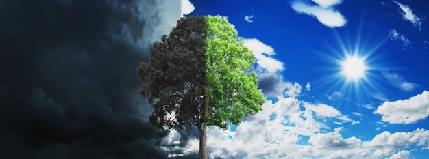 Concept tree growing and dry with sky and sun Premium Photo