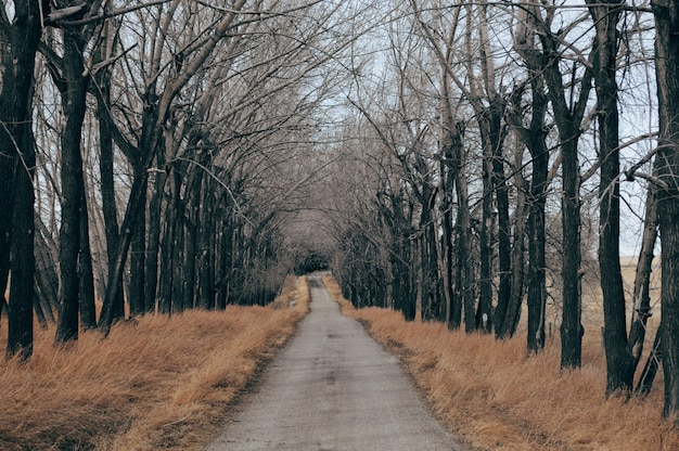 Concrete road surrounded by dry grass and bare trees Free Photo
