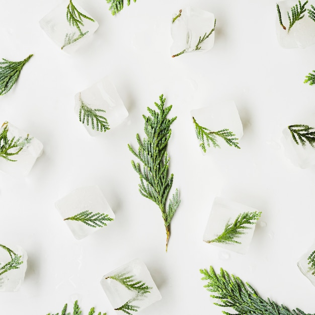 Conifer needles in ice cubes Free Photo