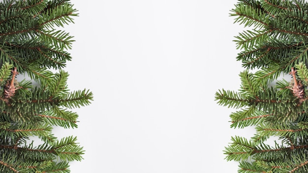 Coniferous branches on light board Free Photo