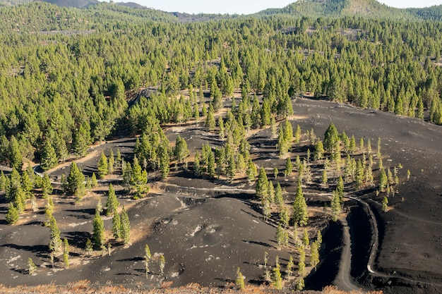 Coniferous forest growing on volcanic ground Free Photo
