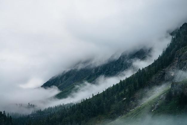 Хвойный лес на склоне горы среди низких облаков. атмосферный вид на скалистые горы с хвойными деревьями в густом тумане. призрачный туманный лес на больших скалах. минималистический драматический пейзаж рано утром Premium Фотографии