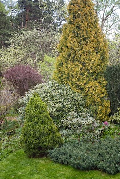 Coniferous trees in the garden: spruce, arborvitae, pine, fir, juniper. Premium Photo