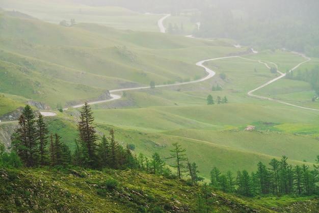 Хвойные деревья на фоне серпантинной дороги в гористой местности, в окружении густого тумана. Premium Фотографии