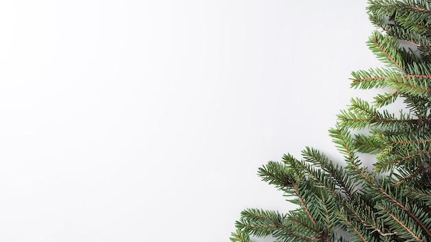 Хвойные ветки на световой доске Бесплатные Фотографии