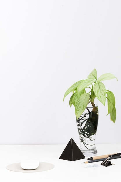 Contemporary workspace with plant in glass vase on desk Free Photo