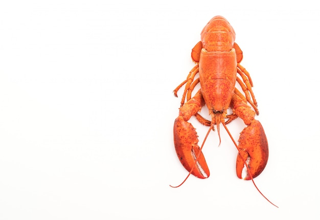 Cooked lobster isolated Premium Photo