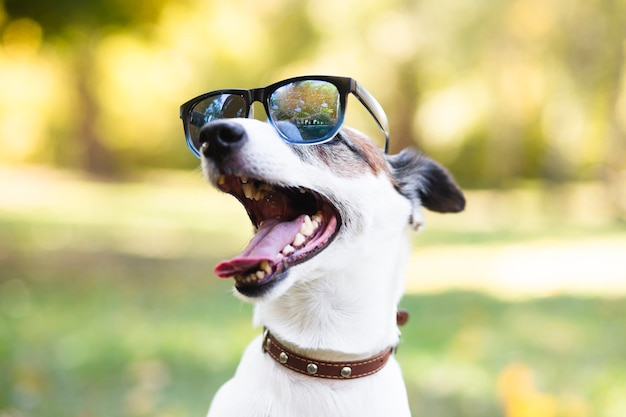 Cool dog wearing sunglasses in park Free Photo