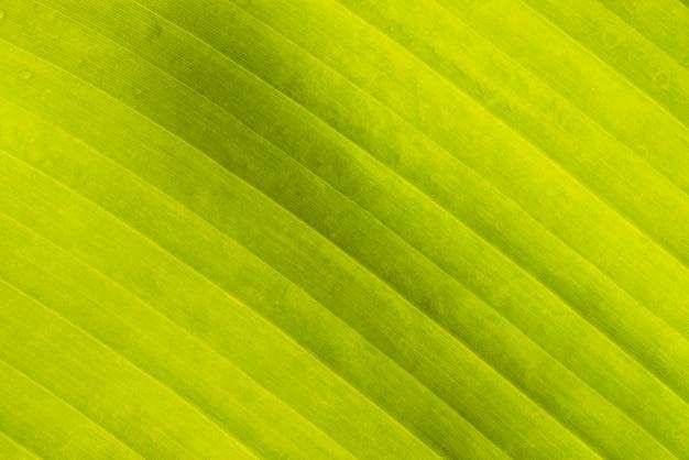 Copy space banana leaf texture Free Photo
