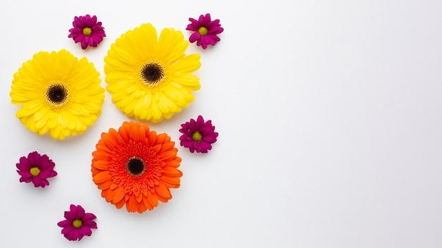 공간 복사 화려한 꽃 무료 사진