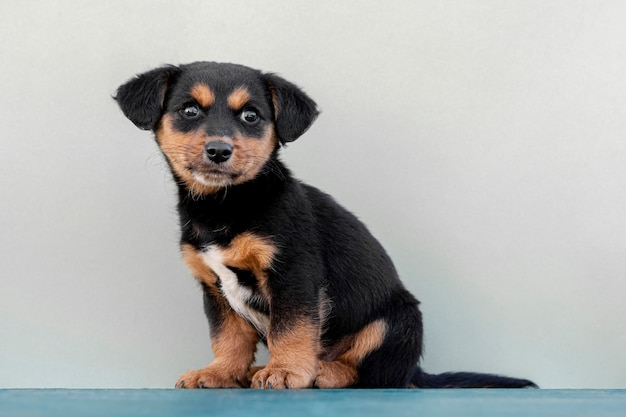 Copy-space cute dog on white background Free Photo