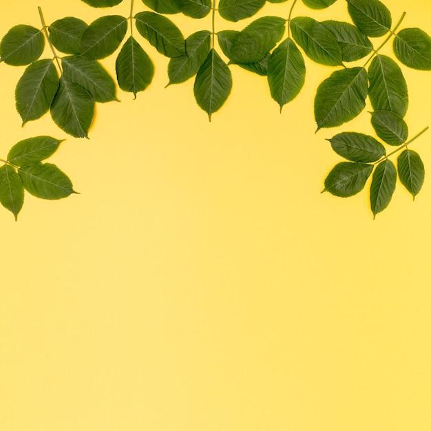 Copy space foliage design on yellow background Free Photo