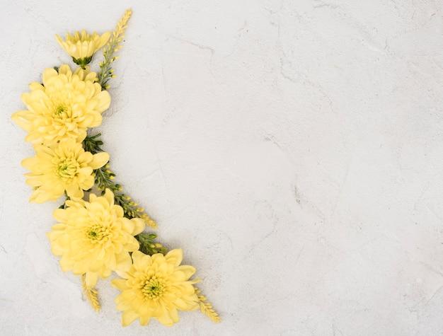 Copy space spring branch of gerbera flowers Free Photo