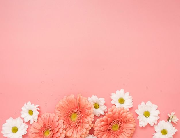 Copy space with daisies and gerbera flowers Free Photo