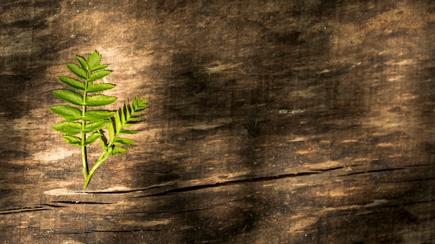 Copy space wooden background with fern leaves Free Photo