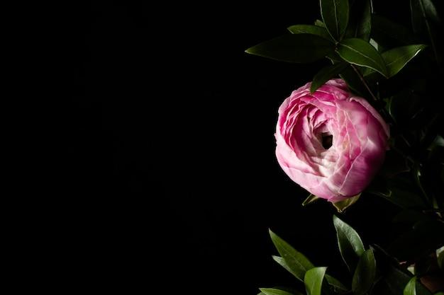Copy-space розовая роза Бесплатные Фотографии