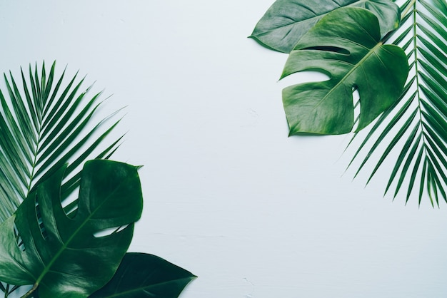 Тропические пальмы листья на цветном фоне с copyspace Premium Фотографии