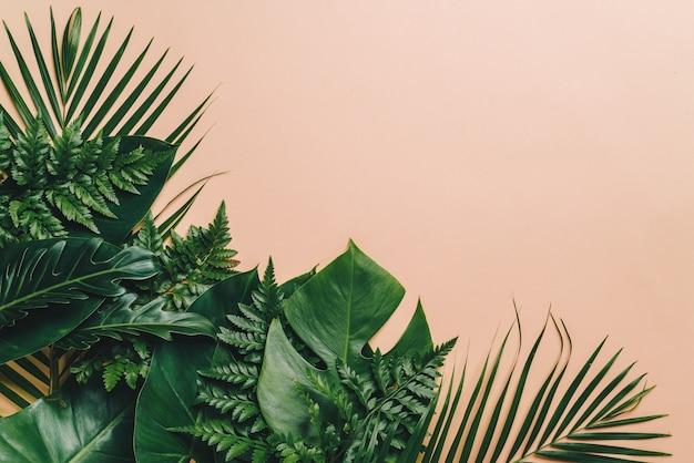 Тропические пальмовые листья с фоном copyspace Premium Фотографии