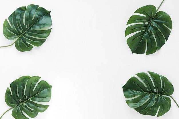 Copyspaceと熱帯の葉のフラットレイアウト 無料写真