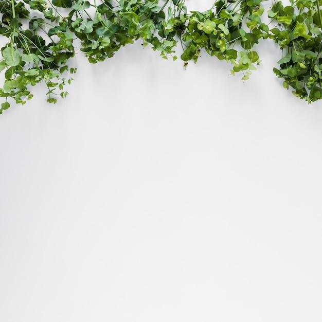 Copyspaceと葉のフラットレイアウト 無料写真