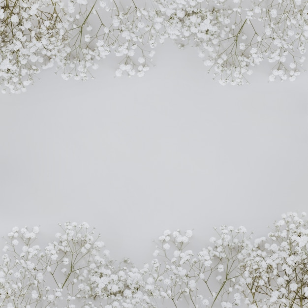 Цветы паникулята на сером фоне с copyspace в середине Бесплатные Фотографии